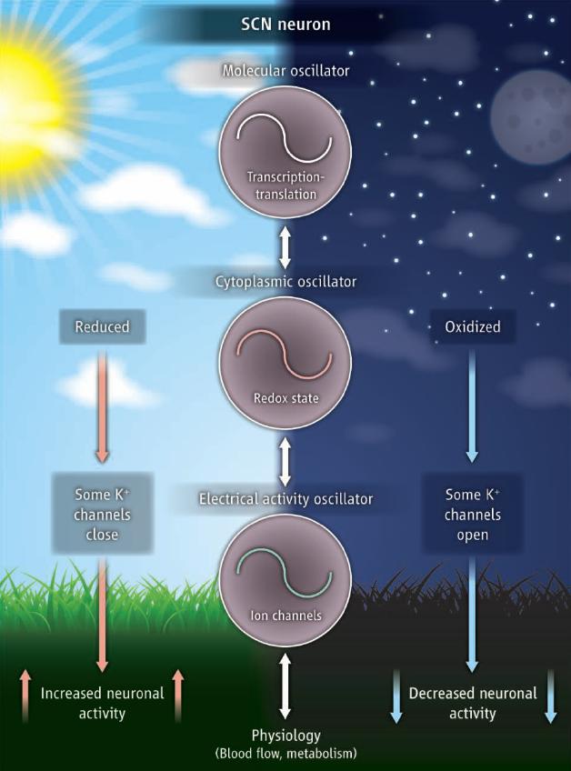 Leer sobre metabolismo de los lipidos resumen